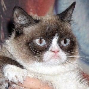 Grumpy Cat 1 of 4