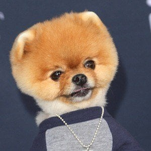 JiffPom real cell phone number