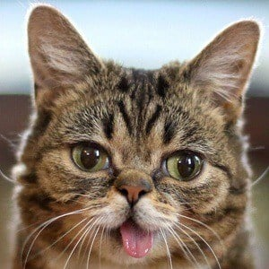 Lil Bub Headshot