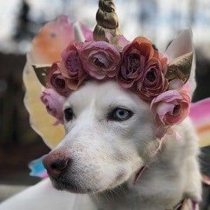 LunaTheUnidog 1 of 9