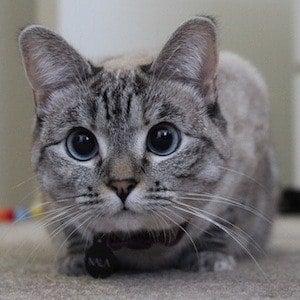 Nala Cat 1 of 6