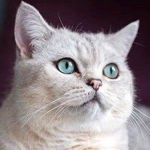 Nuri the Cat 1 of 4