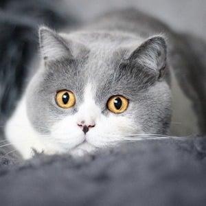 O'Neill Cat 1 of 6