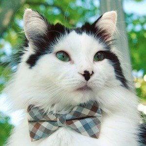 The Oreo Cat 1 of 10