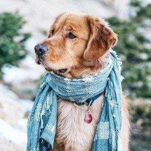 Aspen the Mountain Pup 6 of 10