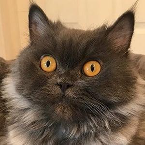Bobbie the Cat 2 of 6
