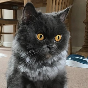 Bobbie the Cat 3 of 6