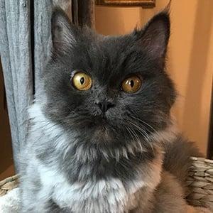Bobbie the Cat 4 of 6