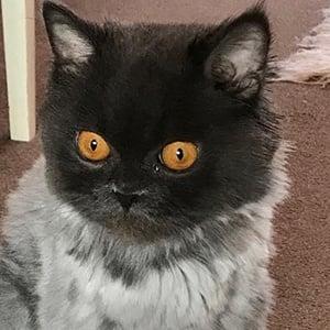 Bobbie the Cat 5 of 6