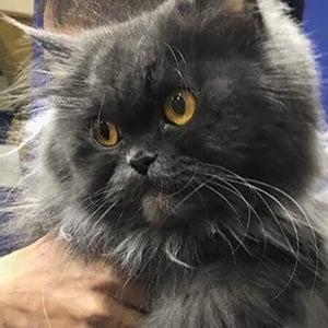 Bobbie the Cat 6 of 6