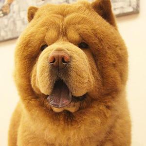 Chowder the Bear Dog 3 of 6