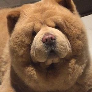 Chowder the Bear Dog 6 of 6