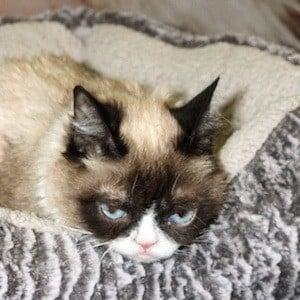 Grumpy Cat 2 of 4