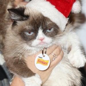 Grumpy Cat 3 of 4