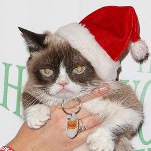 Grumpy Cat 4 of 4