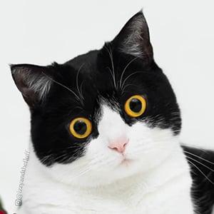 Izzy the Cat 2 of 6