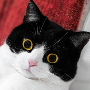 Izzy the Cat 6 of 6