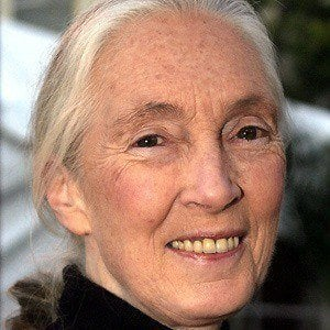 Jane Goodall 4 of 7