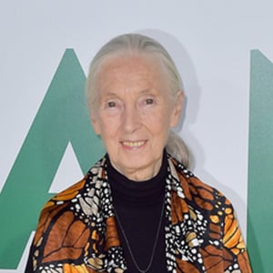 Jane Goodall 6 of 7