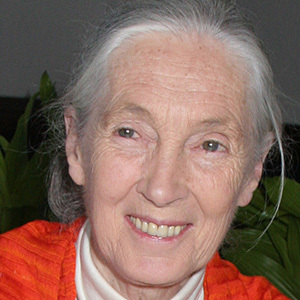 Jane Goodall 7 of 7