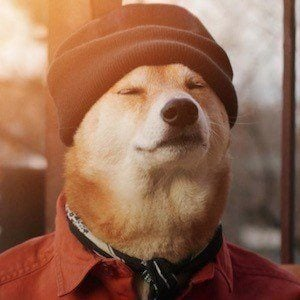 Menswear Dog 2 of 10