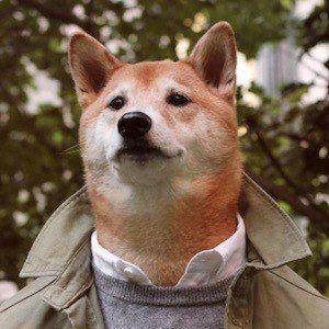 Menswear Dog 3 of 10