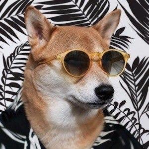 Menswear Dog 4 of 10