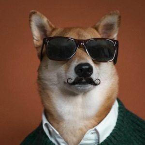 Menswear Dog 5 of 10