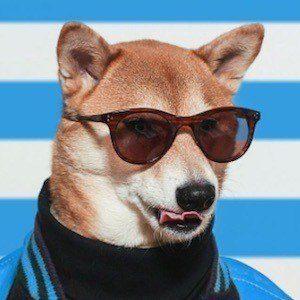 Menswear Dog 6 of 10