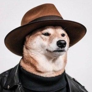 Menswear Dog 7 of 10