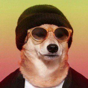 Menswear Dog 9 of 10
