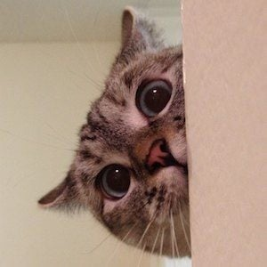 Nala Cat 3 of 6