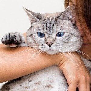 Nala Cat 6 of 6