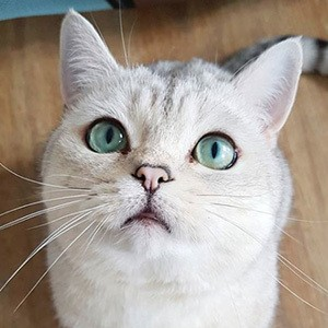 Nuri the Cat 2 of 4