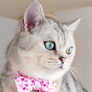 Nuri the Cat 3 of 4