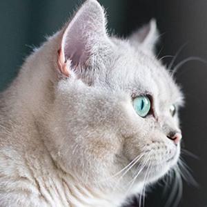 Nuri the Cat 4 of 4