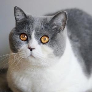 O'Neill Cat 3 of 6