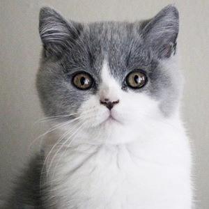O'Neill Cat 5 of 6