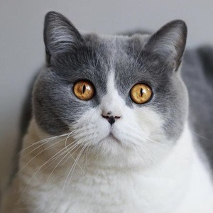O'Neill Cat 6 of 6