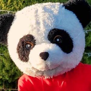 Panda Aventurero 2 of 5