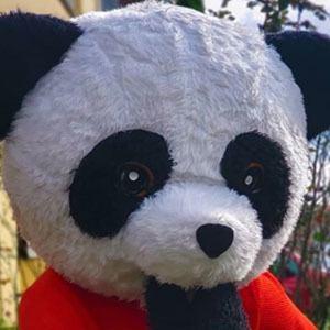 Panda Aventurero 3 of 5