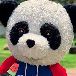 Panda Aventurero 4 of 5
