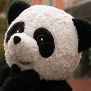 Panda Aventurero 5 of 5