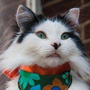 The Oreo Cat 5 of 10