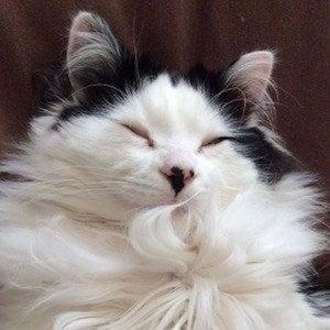 The Oreo Cat 9 of 10
