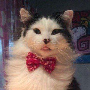 The Oreo Cat 10 of 10