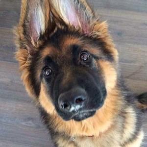 Zeus Shepherd 6 of 6